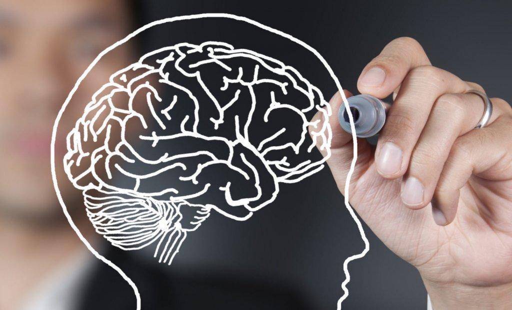 Цели и мозг